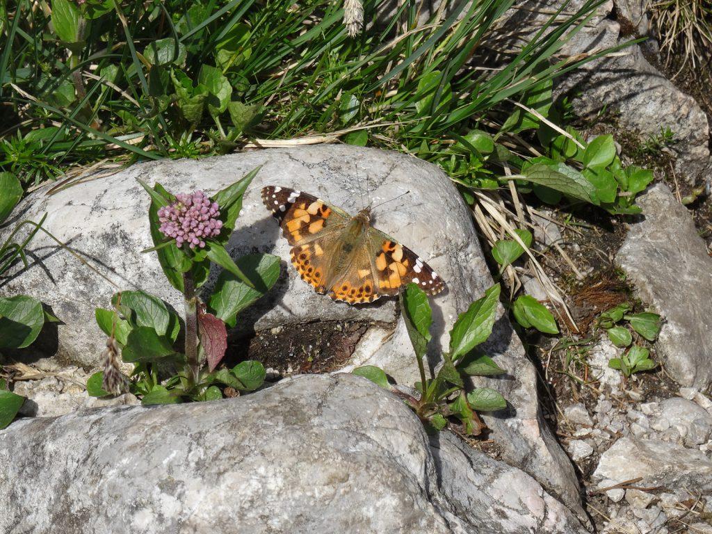 13-13_Schmetterling