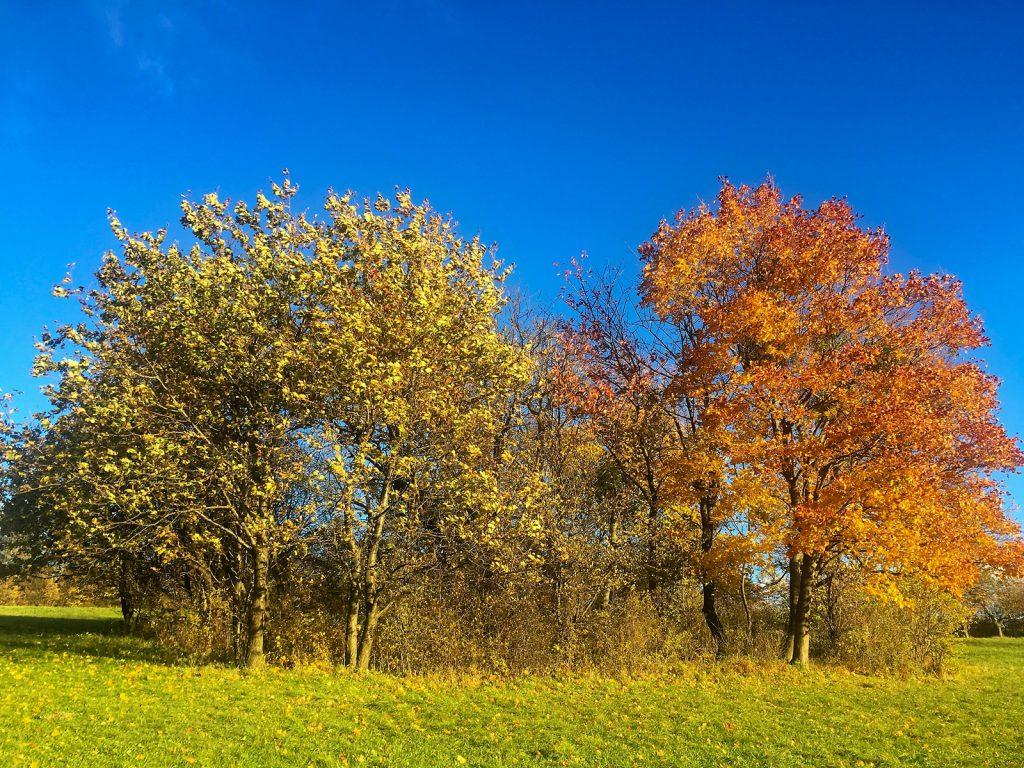 17-37_Herbst
