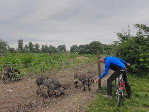 Rad- und Wandertage im Burgenland